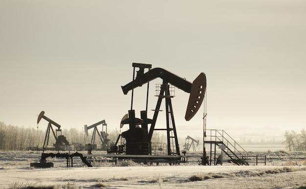 Поле с домкратами нефтяных насосов в окружении зелени под солнечным светом Бесплатные Фотографии