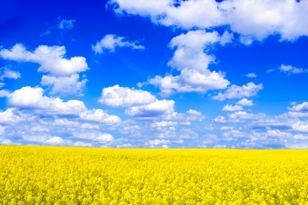 Field with yellow flowers and clouds Free Photo