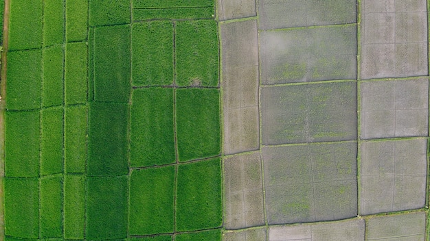 Fields in bali are photographed from a drone Free Photo