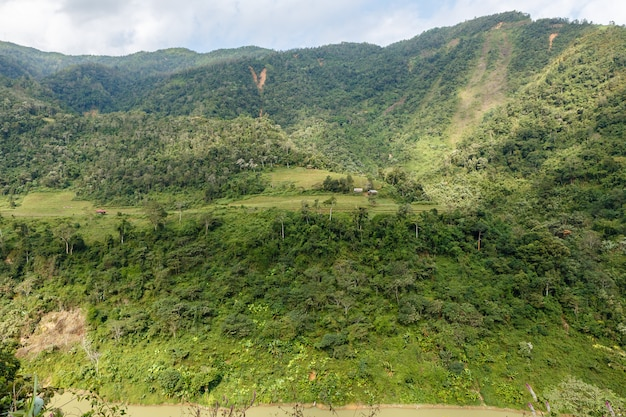 Fields and jungle on the mountainside Premium Photo