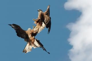 Fighting kites Free Photo