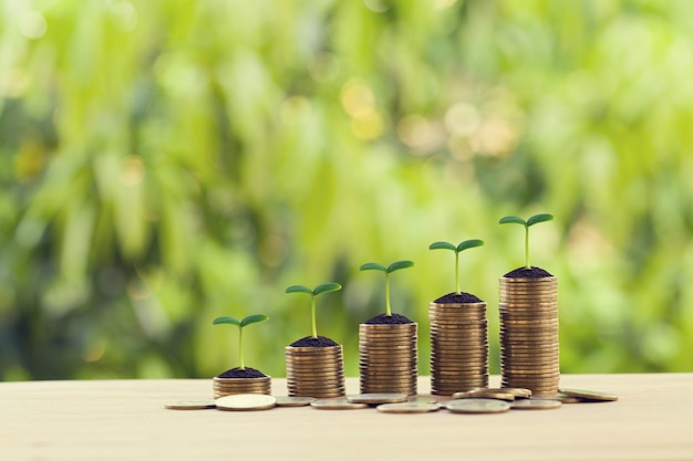 Financial concept: green sprout on rows of increasing coins on wood table. stock investment for dividend and capital gain in a long-term growth Premium Photo