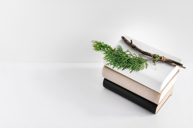 Fir twig on stack of books over white background Free Photo