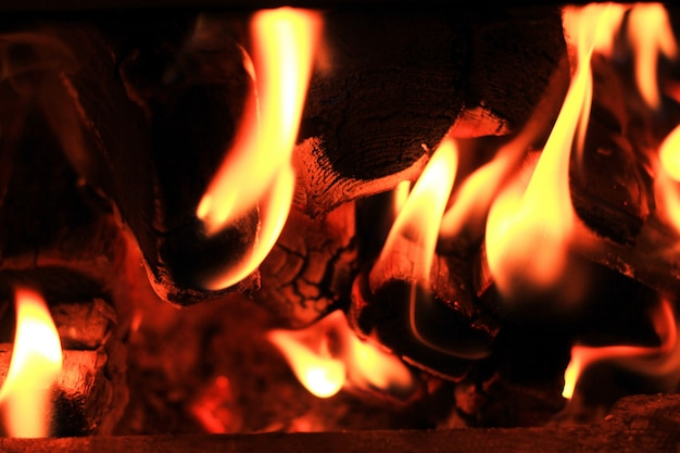 Fire burns in a wood stove charred logs Premium Photo