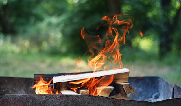 Fire, flames from wood ember for grill or bbq picnic, fume and firewood outdoor Premium Photo
