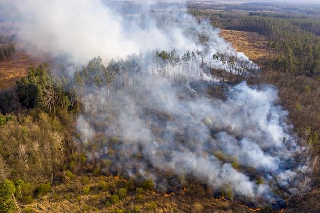 Пожар в лесу, житомирская область, украина. Premium Фотографии