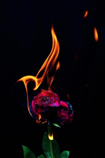 картинки розы и огонь области хирургии несут