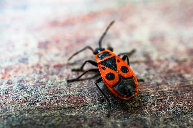 Firebug на деревянной поверхности. Бесплатные Фотографии