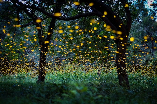 Firefly flying in the forest.  in the bush at night at thailand. long exposure photo. Premium Photo