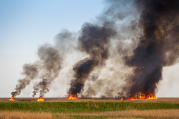 Fires destroy the dried up fields of the old cane Premium Photo