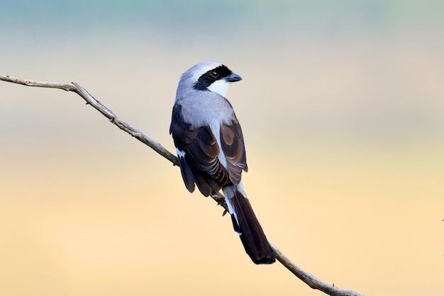 Фискальная птица на ветке Бесплатные Фотографии