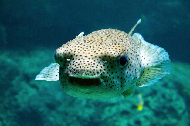 Fish in aquarium, sea life, under water, green colors, nature wildlife,swimming in the salt water. Premium Photo