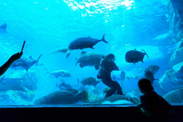 Fish in aquarium Premium Photo