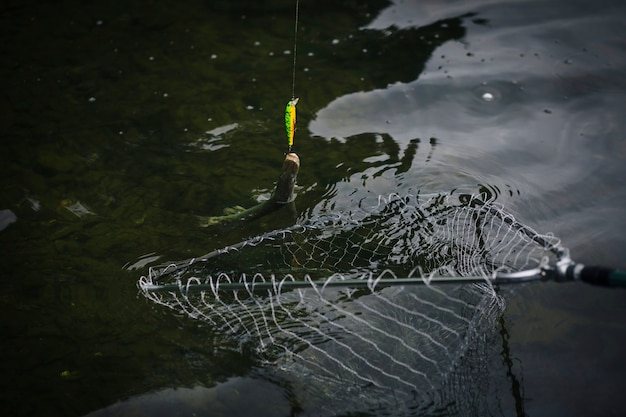 Fish attached to a hook caught in fishing net Free Photo