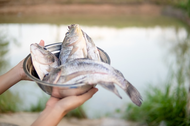 Fish in bowl on hand for cooking on blurred pond nature Premium Photo
