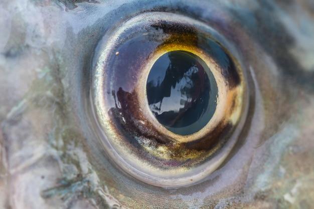 Fish eye close up Premium Photo