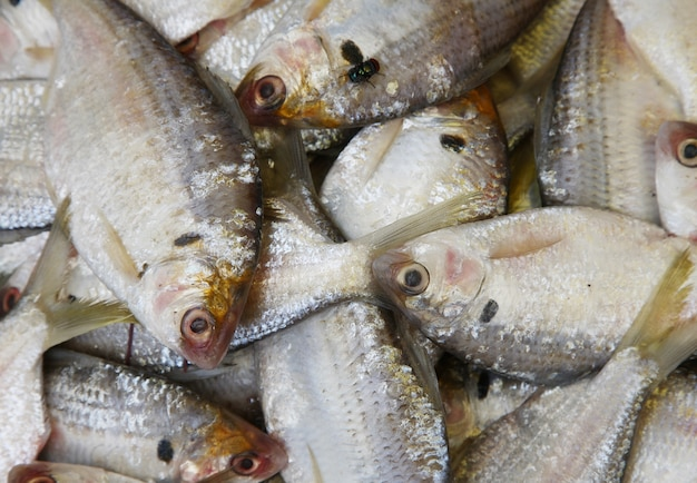 fish pile Free Photo