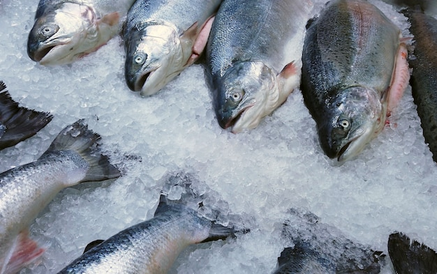 Fish sea salmon lie on the ice in the store or in the kitchen Premium Photo