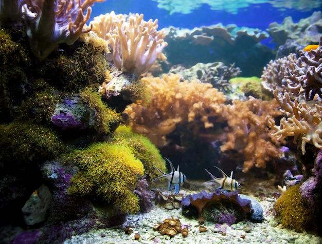 Fish swimming in the sea bottom Free Photo