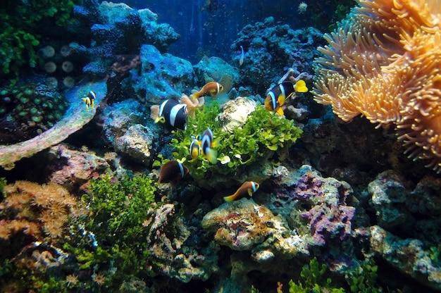 Fish swimming Free Photo