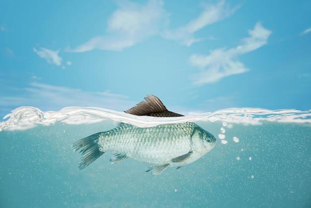水の下で魚。フナが川に落ちる Premium写真