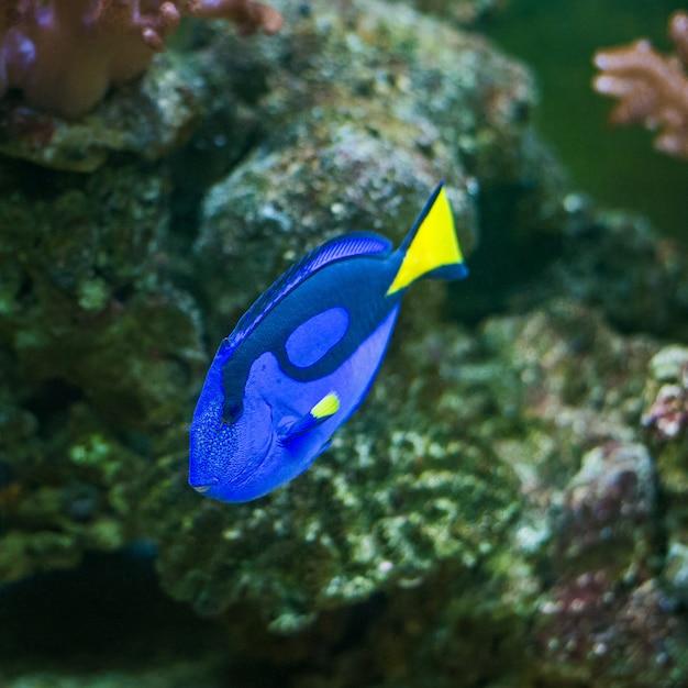 Fish Premium Photo