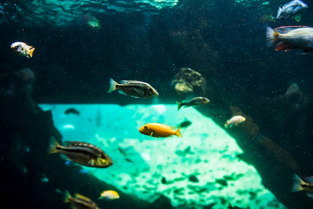 Fishes swimming in the sea Free Photo
