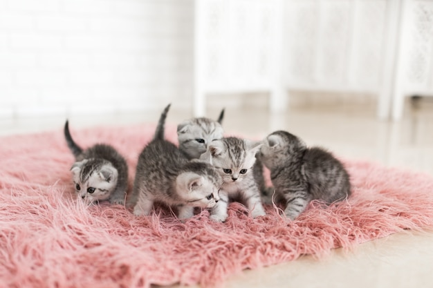 5つの小さな灰色の子猫がピンクのカーペットに横たわっています 無料写真