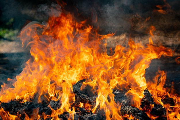 Flame fire burning garbage on black background Premium Photo