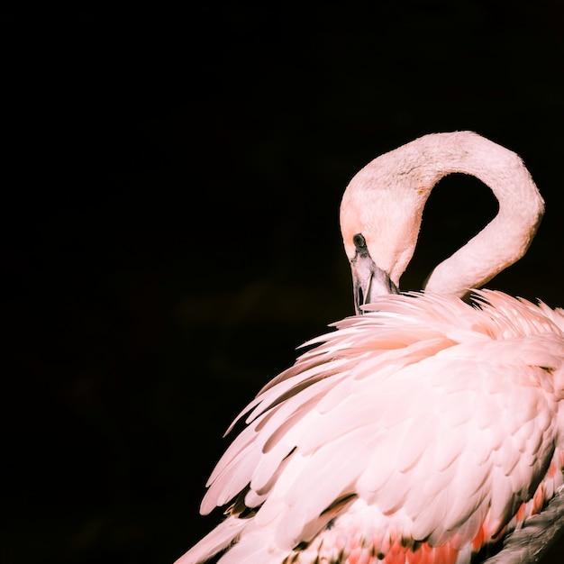 Flamingo Premium Photo