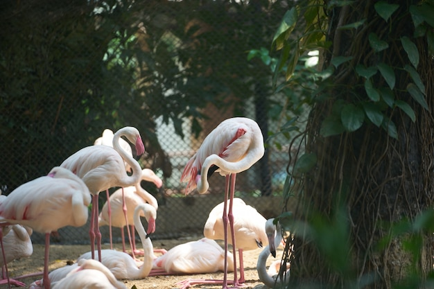 Flamingos stand on land and sunlight with shady around by trees with net behind in zoo Premium Photo