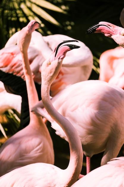 Flamingos Free Photo