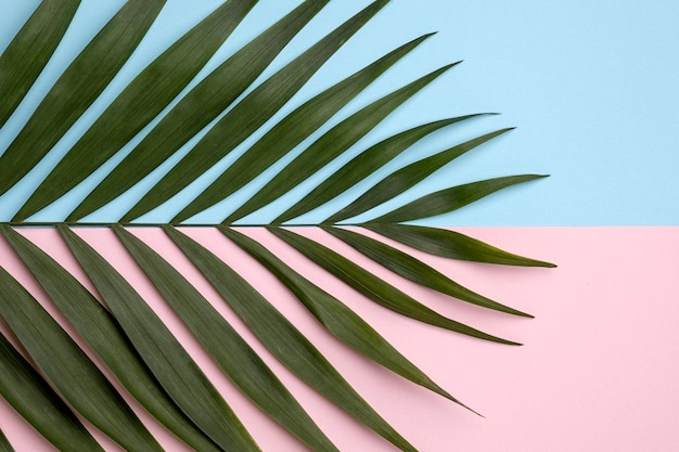 緑の葉のフラットレイアレンジメント 無料写真