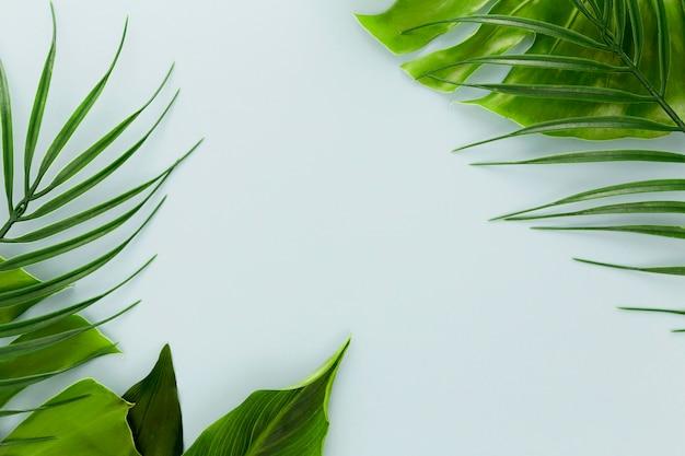 Lay piatto di assortimento di foglie diverse Foto Gratuite