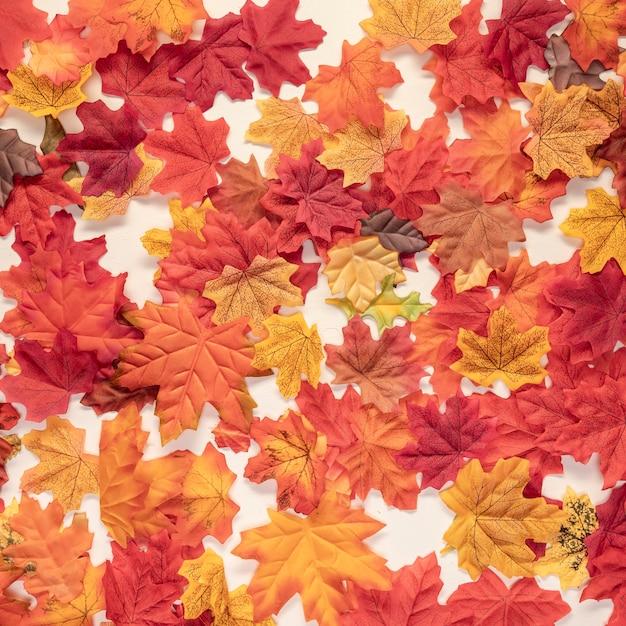 Flat lay autumn colourful leaves Free Photo
