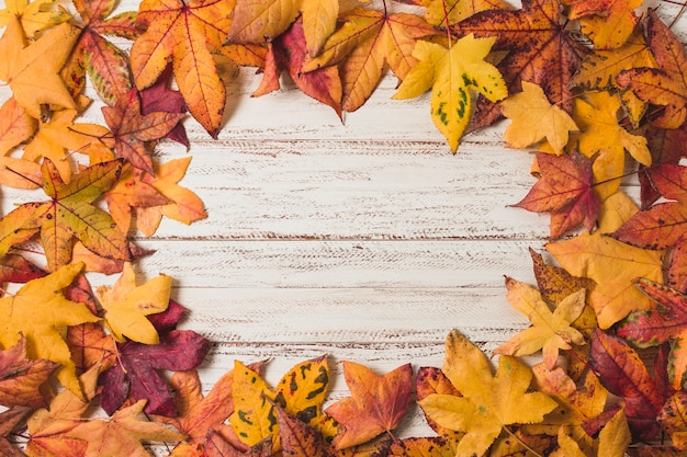 Flat  lay autumn leaves frame Free Photo