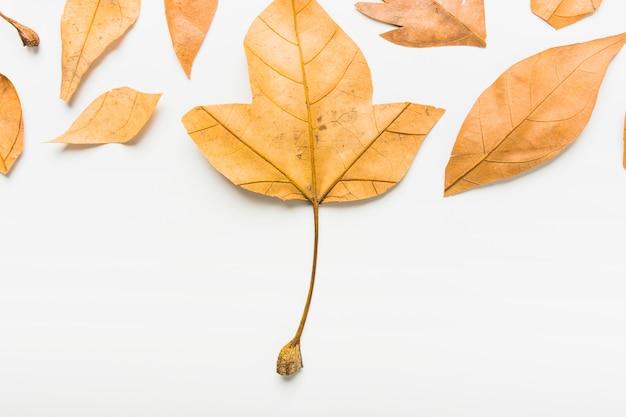 Distesi di foglie d'autunno Foto Gratuite