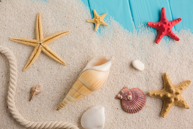 Flat lay beach concept with seashells Free Photo
