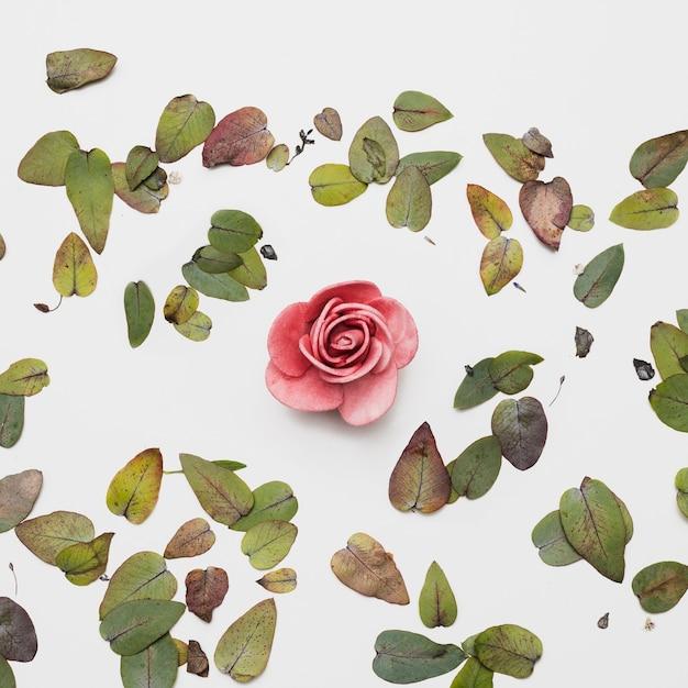 Flat lay of beautiful flowers Free Photo