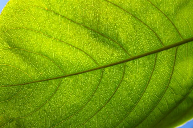 Close-up piatto laici di foglia verde Foto Gratuite