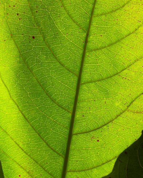 緑の葉のフラットレイクローズアップ 無料写真