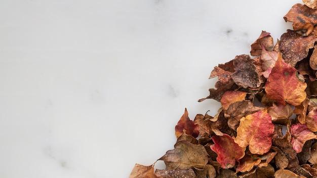 복사 공간이 평평하다 마른 잎 무료 사진