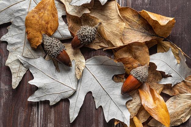 평평하고 마른 잎 무료 사진