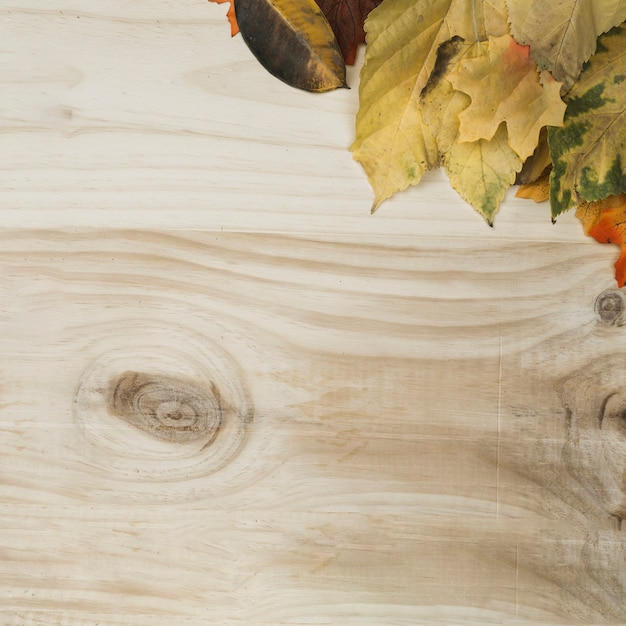 Flat lay of fall leaves designed in frame corner Free Photo