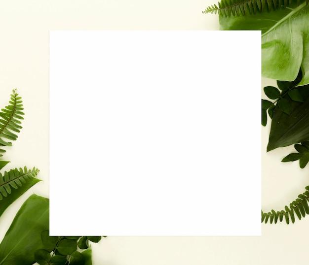 Lay piatto di felci con foglie di monstera e altre foglie Foto Gratuite