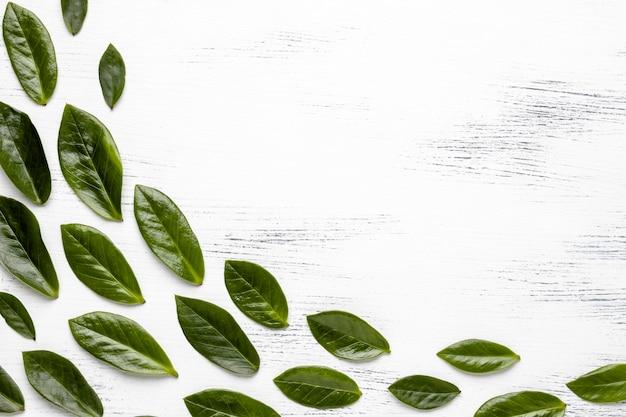 Disposizione delle foglie verdi piatte con spazio di copia Foto Gratuite