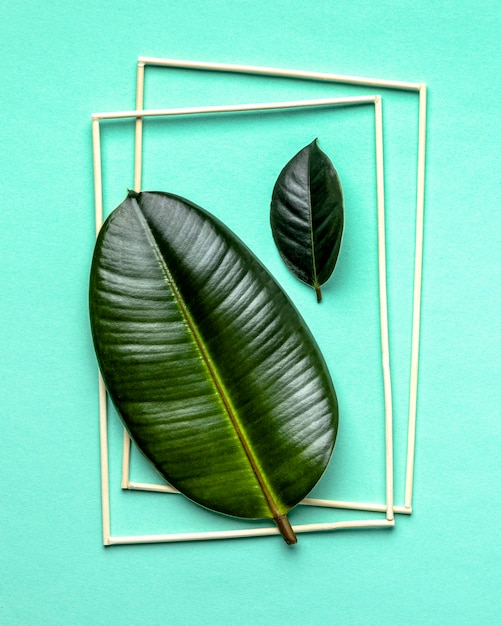 フレーム付きフラットレイ緑の葉の配置 無料写真
