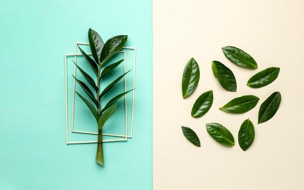 フラットレイ緑の葉の品揃え 無料写真