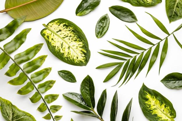 フラットレイ緑の葉の構成 無料写真