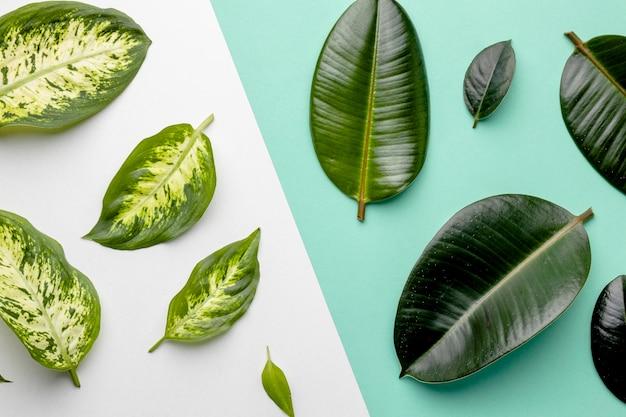 평평하다 녹색 잎 구성 무료 사진